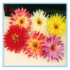 Bohemia Hair Accessories Flower Chrysanthemum Hairpins