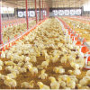 Automatic Poultry Control Shed Equipment for Chicken Shed