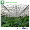 Flower/Fruit/Vegetables Growing Glass Greenhouse with Sunshade System