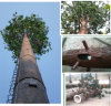Pine Tree Tower for Telecommunication