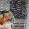 Hexagonal Wire Mesh/Chicken Rabbit Coop Wire Mesh/ PVC/ Galvanized Chicken Netting