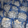 Fresh Pure White Garlic 20kg Mesh Bag