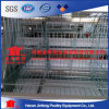 Automatic Chicken Layer Cage for Sale in Algeria