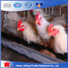 Chicken Equipment China (Mainland) Animal Cages