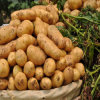 2014 Chinese Fresh Holland Potato Vegetables