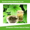 (Jiaogulan) Chinese Natural Herbal Tea Gynostemma