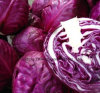 2017 Fresh Purple Cabbage with High Quality
