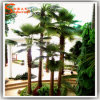 China Suppliers Artificial Fan Palm Tree with Fiberglass Trunk