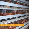 Raise hens with automatic equipment layer chicken cage