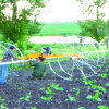 Rolling Wheel Sprinkler for Short Crops Irrigation