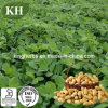 High Purity Peanut Shell Extract Luteolin 98%