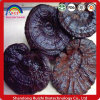 Manufacturer Provide Top Quality Ganoderma Lucidum