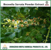 High Quality Boswelia Serrata Powder Extract with 100% Nature Boswellic Acid