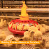 Poultry farm design and high quality automatic chicken broiler cage for Russia farm