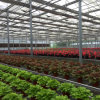 Commercial Multi-Span Long Lifetime Glass Greenhouse for Flowers