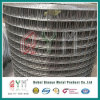 Bird Cage Welded Wire Mesh Roll/ Hot Dipped Galvanized Welded Wire Mesh Roll
