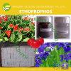 Ethoprophos (90%TC, 5%G, 10%G, 20%G, 20%EC, 40%EC)