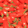 Native Ningxia Goji Berry Wolfberry