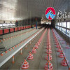 Broiler Poultry Farm Equipment with Ce Certificate
