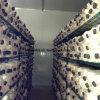 Green Epoxy Coated Wire Metal Mushroom Growing Storage Rack