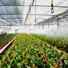2016 The Newest Mutil -Span Film Flower Greenhouse