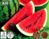 Supply Natural Watermelon Seed Extract 4: 1