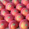 Supplying From Orchard Fresh Red Qinguan Apple