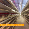 Tianrui complete Automatic Layer Raising Equipment for the Philippines poultry farm