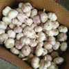New Season Fresh Normal White Garlic