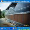 Low Cost Plastic PE Film Greenhouse Hot Sale for Agriculture