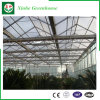 Flower/Fruit/Vegetables Growing Glass Greenhouses with Sunshade System