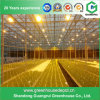 Cheap Greenhouse Plant Grow Sodium Light/ Lamp for Sale