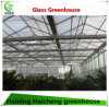 Venlo Type Glass Greenhouse for Modern Agriculture