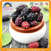 Plant Extract Mulberry Extract Anthocyandins for Health Care
