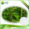 Plant Extract Giant Knotweed Extract Resveratrol (Polygonum Cuspidatum)