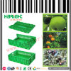 Stackable and Foldable Plastic Fruit Crate