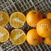 Chinese Exported Standard Fresh Valencia Orange