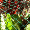 Agriculture Anti Bird Barrier Netting