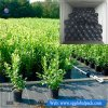 102GSM Black PP Woven Ground Cover Fabric