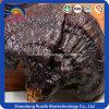 Quality Assurance Ganoderma Lucidum Wholesale