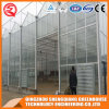 Multi-Span Stainless Steel/ Aluminum Profile PC Sheet Greenhouse