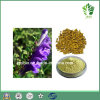 Pure Natural Scutellaria Baicalensis Extract Baicalin 85%~95%, Sku-Baicalin 20%~95%