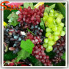 Home Decoration Plastic Artificial Grape Fruit