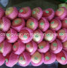 2017 New Fresh Red Star Apple with Good Quality