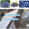 Blueberry Sorter/ Strawberry Sorter/ Blueberry Grading Machine