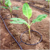 Drip Irrigation for Fruit Trees
