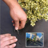 Hot Sale SOD Staples Nail Metal Ground Staples From China
