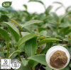 High Quality Oolong Tea Extract 20%~80% Polyphenols by UV
