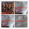 98% Male Muscle Gain Raw Testosterone Acetate Steroid Powder for Bodybuilding