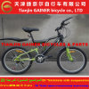 "Gainer 20"" Full Suspension MTB Bicycle with 21sp Stable Quality"
